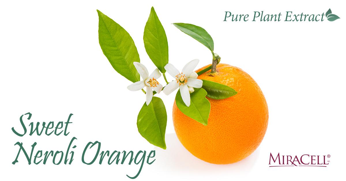 Sweet Neroli Orange